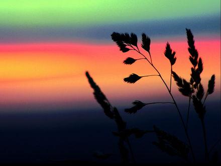 Обои Травинки на фоне яркого неба на закате