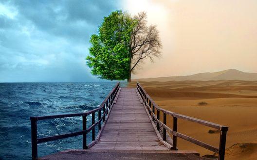Обои Игра стихии или будущее Земли (на одной половине обоев голубая вода, дерево с зелеными листьями, на другой-выжженная пустыня, засохшее дерево)