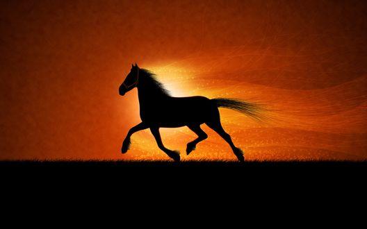 Обои Бегущий конь на фоне заката