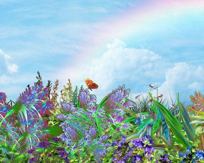 Обои Бабочка летает над травой и цветами на фоне радуги в небе