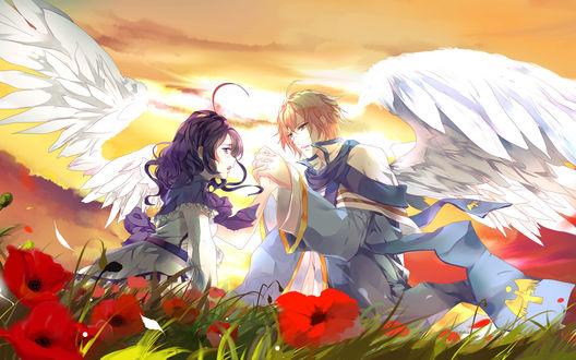 Обои Парень с девушкой с белоснежными крыльями держаться за руки на поле маков и фоне заката