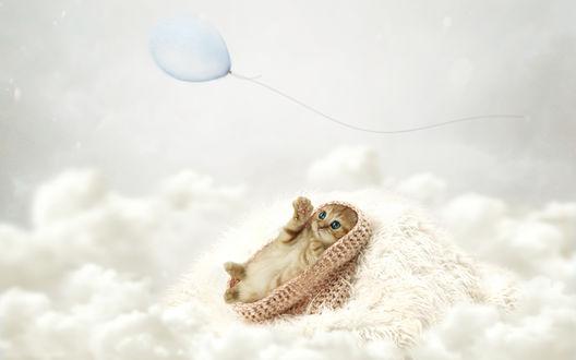 Обои Маленький котенок лежит на пушистом одеяле среди кучевых облаков и пытается лапкой поймать голубой воздушный шарик