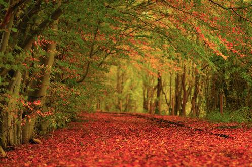 Обои Дорога усыпанная опавшей осенней листвой