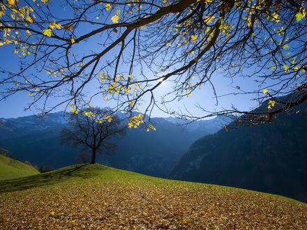 Обои Сквозь ветви дерева, с последними желтыми листьями, открывается вид на заснеженные вершины гор