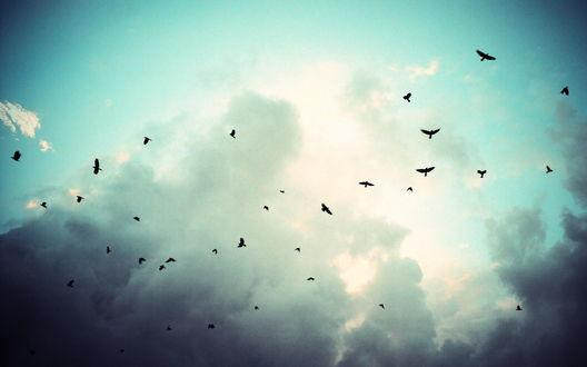 Обои Птицы, летящие в небе