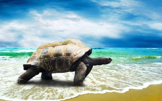 Обои Черепаха на берегу моря на фоне неба