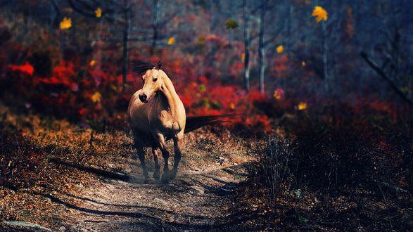 Обои Лошадь бежит по грунтовой дороге в лесу под осенним листопадом