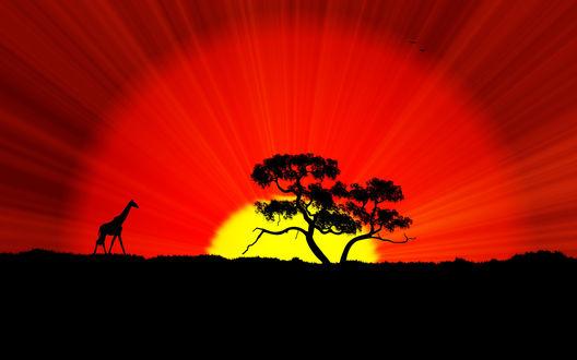 Обои Силуэт жирафа, стоящего на траве рядом с деревом на фоне багряного заката солнца с исходящими от него по всей небесной сфере лучами, парящими птицами