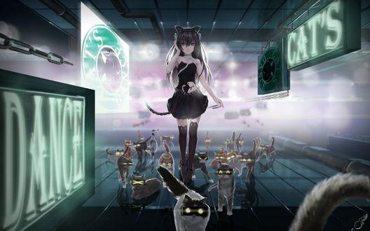 Обои Неко-девушка стоит в окружение кошек (DANCE CATS)