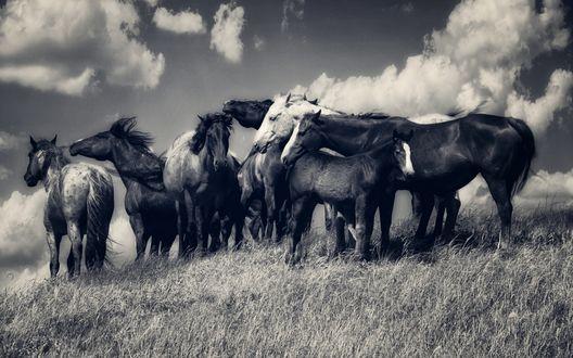 Обои Лошади стоят в поле на фоне неба