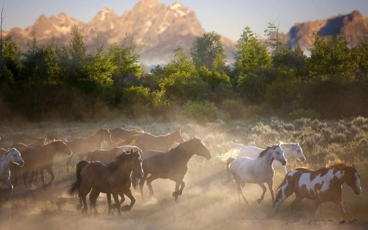 Обои Лошади бегут по поляне на фоне деревьев и гор