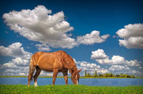 Обои Лошадь пасется на берегу реки на фоне облачного голубого неба