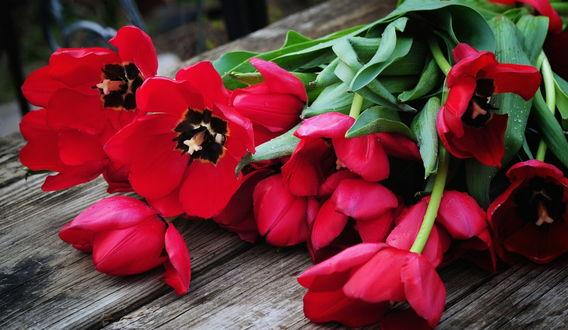 весна ромашки обои на рабочий стол