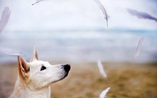 Обои Белый пес на берегу моря наблюдает за летающими перьями