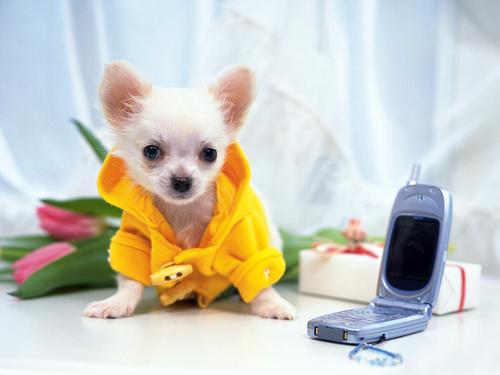 фото цветы на телефон: