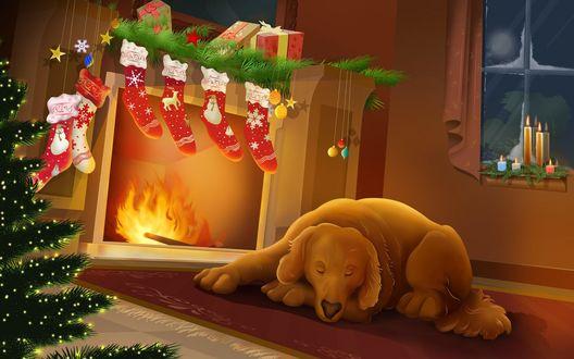 Обои Собака спит у камина с подарками, новогодними атрибутами и горящими свечами на окне