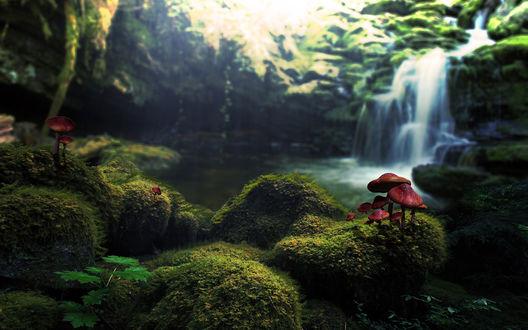 Обои Грибы растут на заросших мхом камнях на фоне водопада