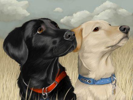 Обои Две собаки смотрят в одну сторону