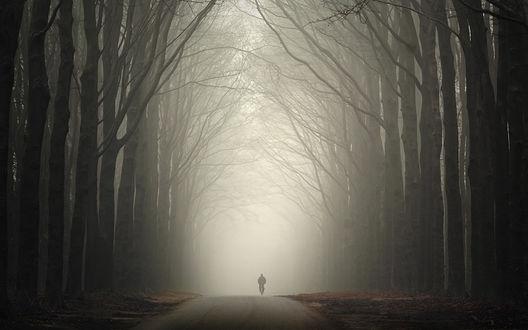Обои Одинокий велосипедист едет по дороге в густом тумане