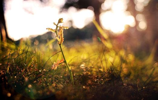 Обои Молодое деревце в траве, залитое солнечным светом