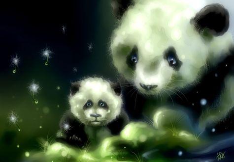 Обои Панда со своим детенышем сидят на темно - зеленом фоне в окружение семян одуванчика