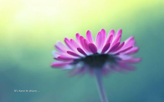 Обои Фиолетовый цветок в макро (Its time to shine. / Это время, чтобы светить.)