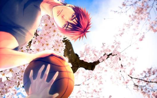 Обои Тайга Кагами с баскетбольным мечом на фоне цветущей сакуры из аниме Баскетбол Куроко / Kuroko no Basuke /