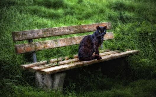 Обои Черная кошка сидит на скамейке, стоящей в траве