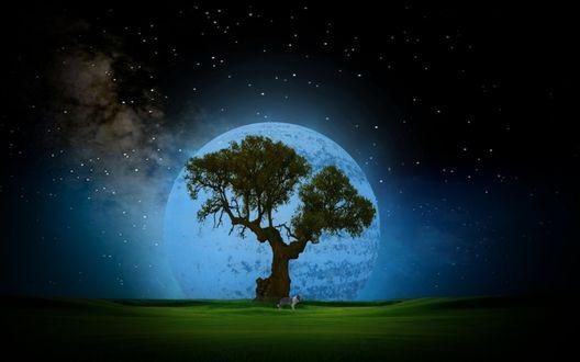 Обои Собака, стоящая на зеленой лужайке возле дерева с могучим стволом и развесистой кроной на фоне звездного ночного неба и одной из планет солнечной системы