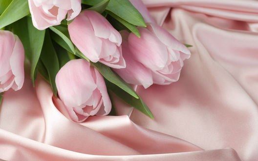 Обои Розовые тюльпаны на розовом шелке