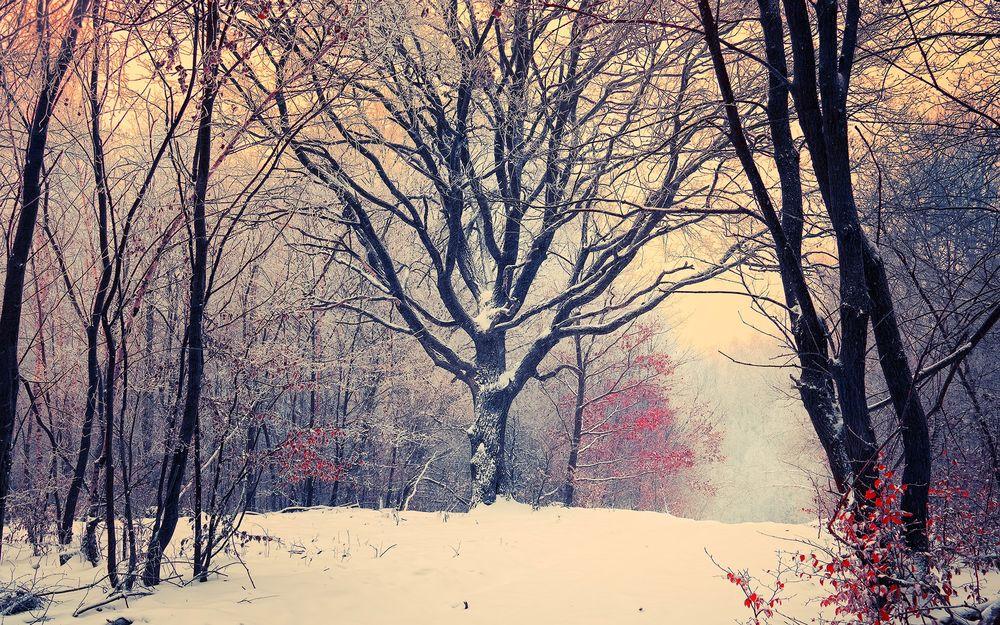 Картинки первый снег осенью 1280х1024