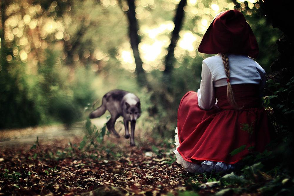 Обои для рабочего стола Девочка в красной шапке сидит на корточках на земле, покрытой сухой листвой, напротив нее стоит волк