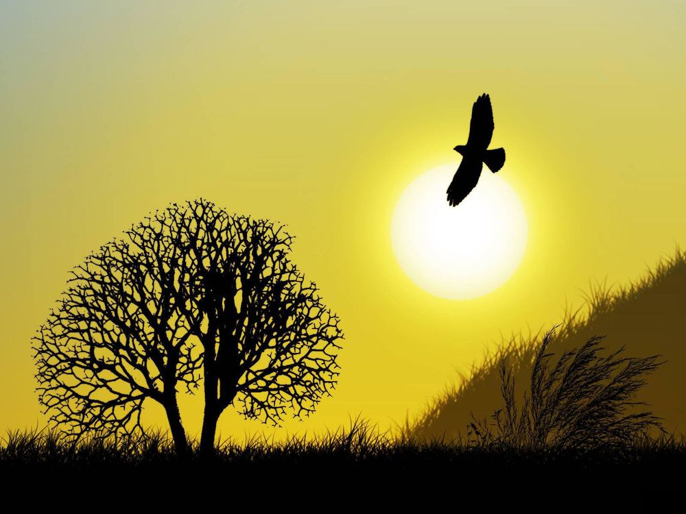 В небе птица
