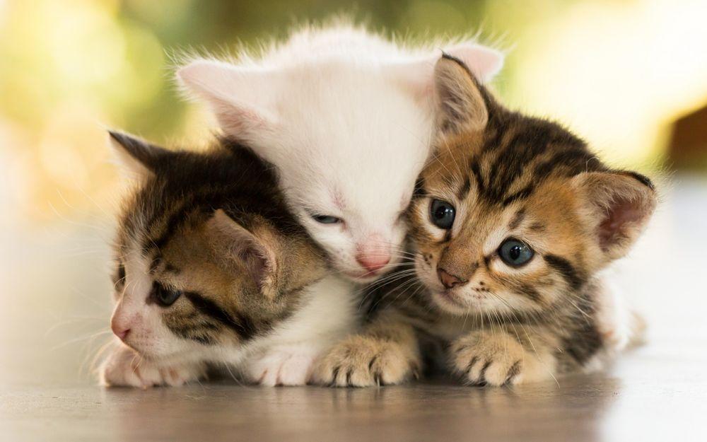 Три котёнка мультик скачать.