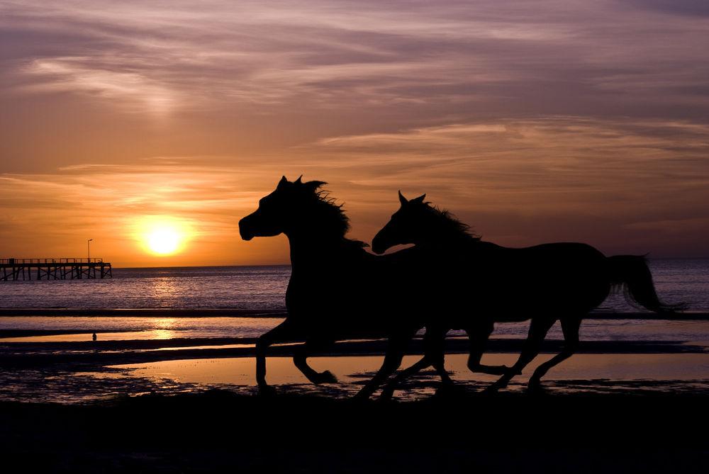 конь на закате картинки простейшего септика-накопителя герметичная