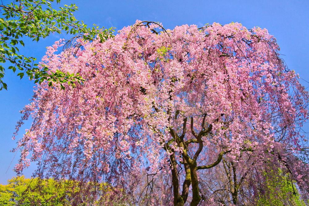скачать бесплатно обои для рабочего стола цветы ромашки