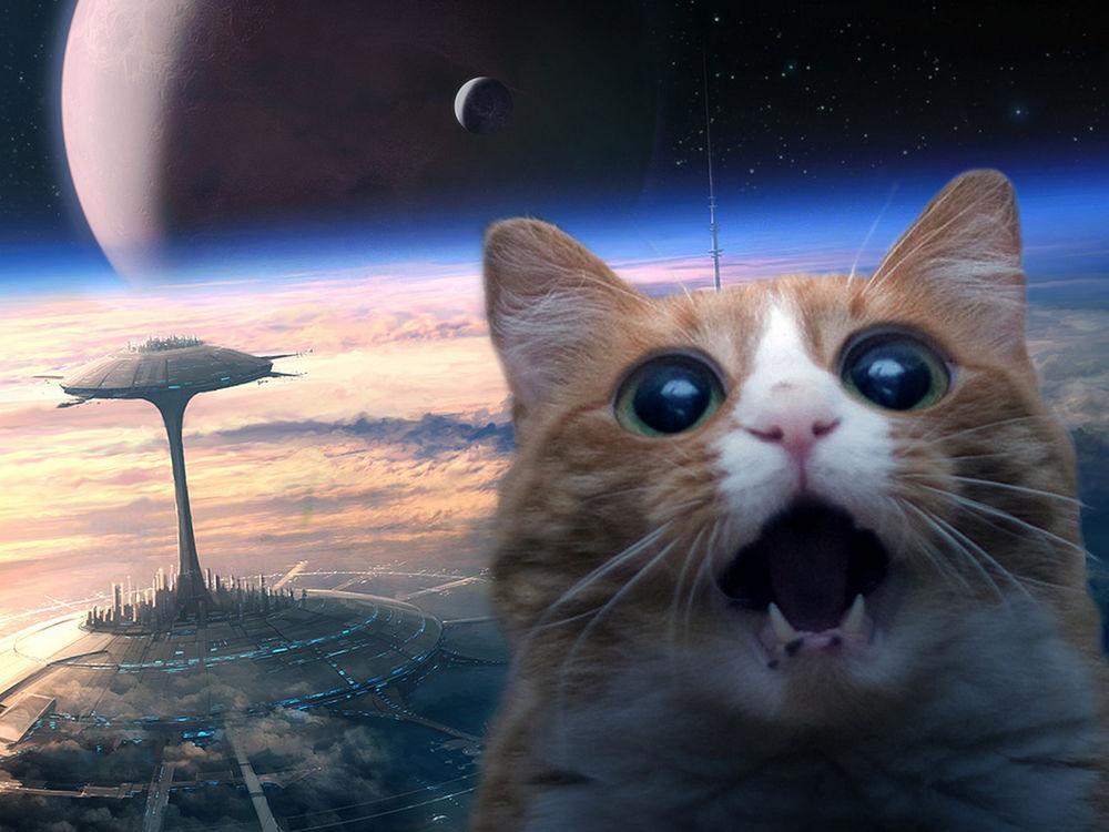 Космос с котом на рабочий стол