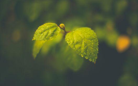 Обои Мокрая листва