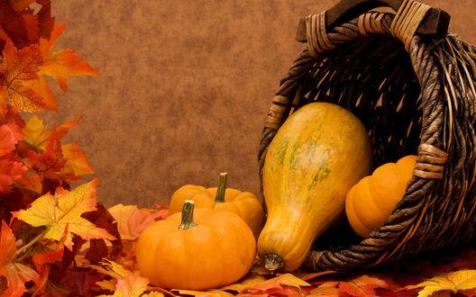 Обои Спелые тыквы разных конфигураций, лежащие на осенних листьях рядом и внутри плетеной корзинки