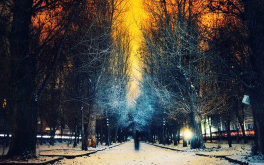 Обои Городская аллея в снегу