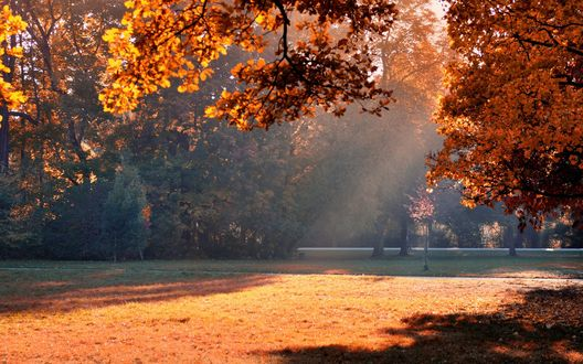 Обои Люди прогуливаются по дорожкам в осеннем парке