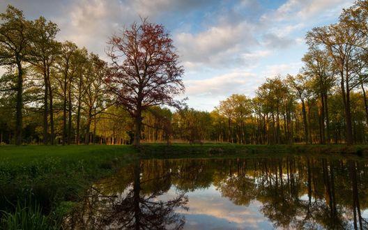 Обои Небольшое озеро в лесу