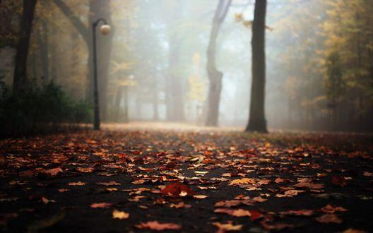 Обои Дорога в парке, усыпанная опавшей осенней листвой