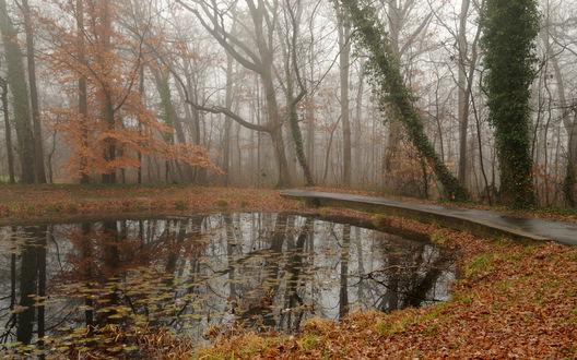 Обои Небольшой пруд в осеннем парке