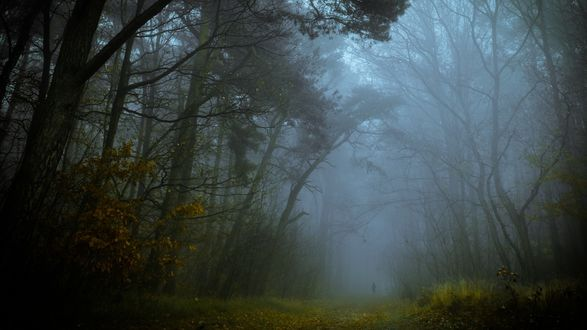 Обои Силуэт человека идущего по дороге осеннего леса в густом тумане