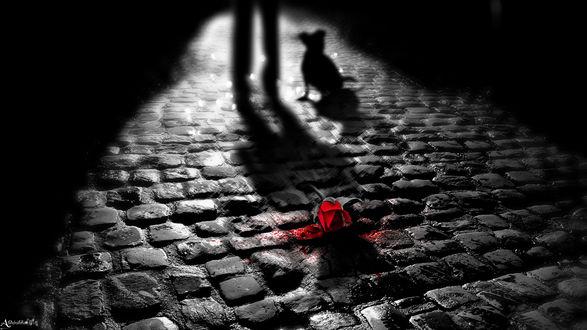 Обои Красная роза лежит на мощеной камнем аллее, впереди видны силуэты ног и собаки