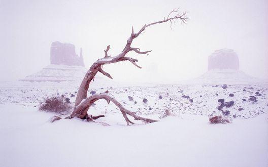 Обои Сухое дерево на фоне двух гор