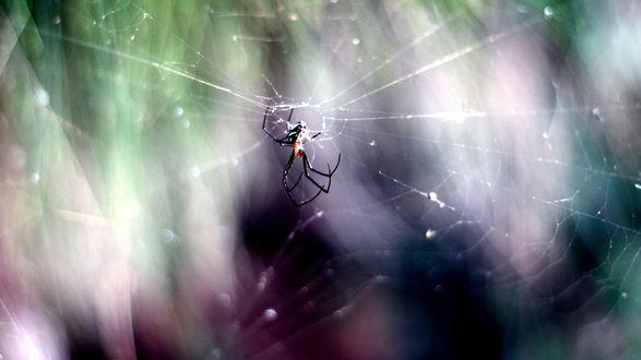 Обои Паук, плетущий паутину