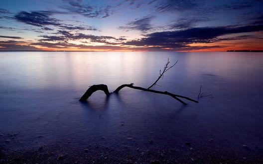 Обои Поваленное дерево лежит в море над которым сгущаются сумерки
