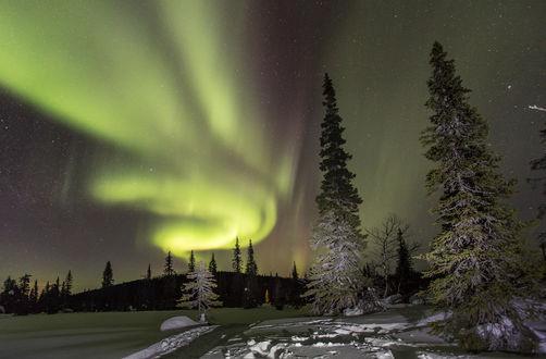 Обои Высокие ели, стоящие на заснеженной поляне на фоне звездного ночного неба и необычной формы Северного Сияния, похожего на джина, выпущенного из бутылки по мотивам сказок, фотография Yuri Ouchinnnikov